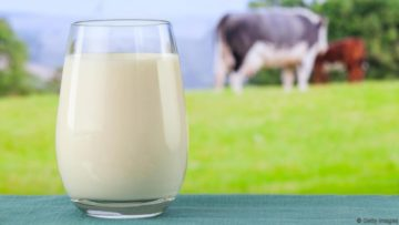The importance of calcium to loose Fat
