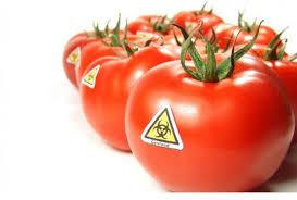 OGM, storia ed evoluzione