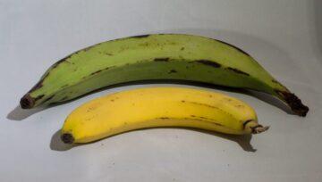 platano e banana